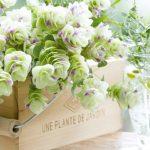 フラワーベースは身近なモノで♪観葉植物をユニークな飾り方で楽しむアイデア7選